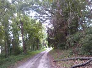2015-06-20 dirt road ward cemetary